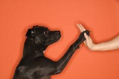 Zwarte hond die vrouwenhoogte vijf geeft. Royalty-vrije Stock Afbeeldingen