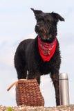 Zwarte hond met een picknickmand Royalty-vrije Stock Afbeelding
