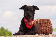 Zwarte hond met een picknickmand Royalty-vrije Stock Fotografie