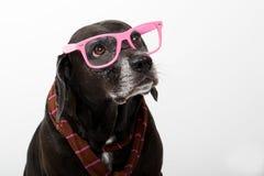 Zwarte hond met roze glazen Stock Afbeelding