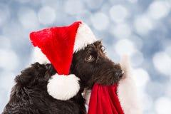 Zwarte hond met santa GLB en zak Royalty-vrije Stock Foto