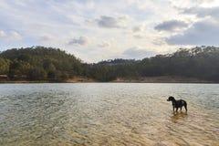 Zwarte hond op de kust van een meer stock foto