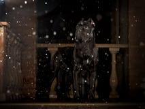 Zwarte hond op de portiek bij nacht Stock Afbeeldingen