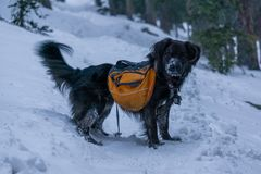 Zwarte Hond op de Winterstijging Stock Afbeeldingen