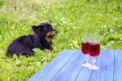 Zwarte hond op groen gras en twee glazen met eigengemaakte rode wijnstok op blauwe raad in openlucht in platteland bij de zomer stock fotografie