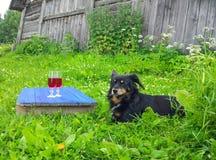 Zwarte hond op groen gras en twee glazen met eigengemaakte rode wijnstok op blauwe raad in openlucht in platteland bij de zomer stock afbeeldingen
