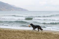 Zwarte hond op het strand royalty-vrije stock afbeeldingen