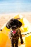 Zwarte hond op kajak Stock Foto's