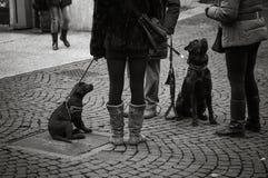 Zwarte honden in leiband, omhoog bekijkend meesters, die in gehoorzaamheid wachten Stock Foto