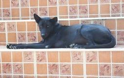 Zwarte hondzitting op trap in tempel stock foto