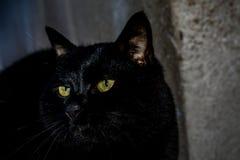 Zwarte kat stock afbeelding