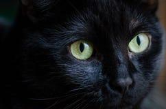 Zwarte kat Stock Foto's