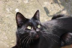 Zwarte kat binnen ter plaatse in een zonnige de zomerdag Stock Fotografie