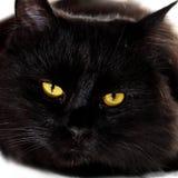 Zwarte kat die aan u met heldere gele ogen kijken Royalty-vrije Stock Afbeelding