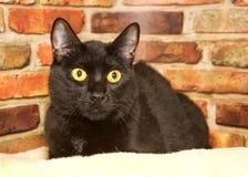 Zwarte kat die in bed tegen een bakstenen muur leggen Stock Afbeelding