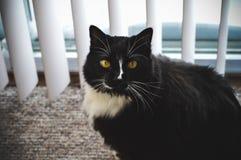 Zwarte kat die centrum kijken Royalty-vrije Stock Foto