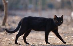 Zwarte kat die onderaan lopen Stock Afbeeldingen