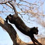 Zwarte kat die onderaan lopen royalty-vrije stock afbeelding