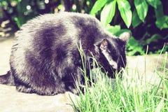 Zwarte kat die op de tuinweg dichtbij het de grasgazon en struiken lopen stock afbeeldingen