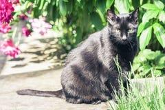 Zwarte kat die op de tuinweg dichtbij het de grasgazon en struiken lopen royalty-vrije stock afbeelding