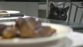 Zwarte kat die op een stuk van vlees op de keukenlijst letten royalty-vrije stock foto