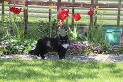 Zwarte kat die in openlucht onder de bloemen in de lente lopen Stock Fotografie