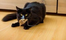 Zwarte kat die stuk speelgoed vangen Royalty-vrije Stock Foto's