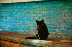 Zwarte kat die u kijken stock afbeeldingen
