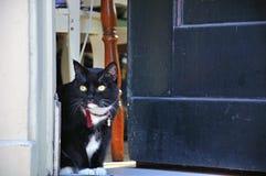 Zwarte kat die uit deur kijken Stock Afbeeldingen
