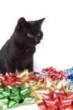 Zwarte kat en Kerstmisbogen Stock Afbeeldingen