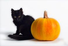 Zwarte kat en pompoen Stock Foto's