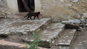 Zwarte kat met een slechte bezem op de achtergrond Stock Afbeelding