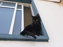 Zwarte kat met een wit staartuiteinde Stock Foto's