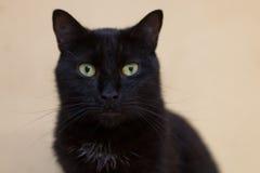 Zwarte kat met geel ogenportret Royalty-vrije Stock Fotografie