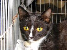 Zwarte kat met gele ogen Royalty-vrije Stock Foto's