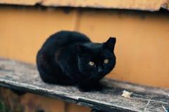 Zwarte kat met gele ogen Royalty-vrije Stock Afbeeldingen