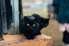 Zwarte kat met gele ogen Stock Foto