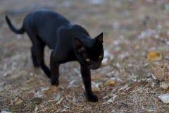 Zwarte kat met gele ogen die onderaan de straat lopen royalty-vrije stock foto's