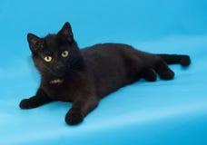Zwarte kat met gele ogen die op blauw liggen Royalty-vrije Stock Fotografie