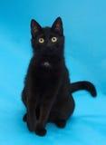 Zwarte kat met gele ogen die op blauw zitten Stock Afbeeldingen