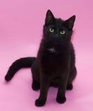 Zwarte kat met gele ogen die op roze zitten Stock Afbeeldingen