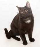 Zwarte kat met gele ogen en witte vlek Royalty-vrije Stock Afbeelding