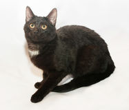 Zwarte kat met gele ogen en witte vlek Royalty-vrije Stock Fotografie