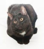 Zwarte kat met gele ogen en witte vlek Stock Foto's