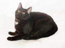 Zwarte kat met gele ogen en witte vlek Royalty-vrije Stock Foto