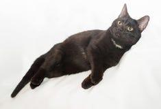 Zwarte kat met gele ogen en witte vlek Stock Foto