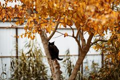 Zwarte kat met gele ogen op een boom met gele bladeren royalty-vrije stock afbeeldingen