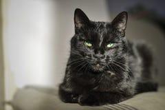 Zwarte kat met groene ogen Stock Afbeelding
