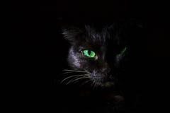 Zwarte kat met groene ogen Stock Fotografie