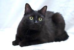 Zwarte kat met groene ogen royalty-vrije stock foto